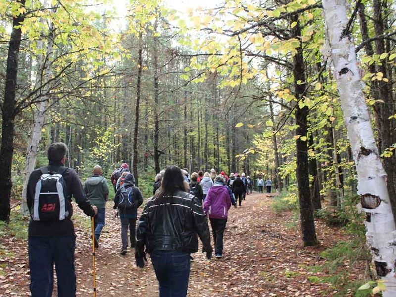 group of people walking on a woodland trail