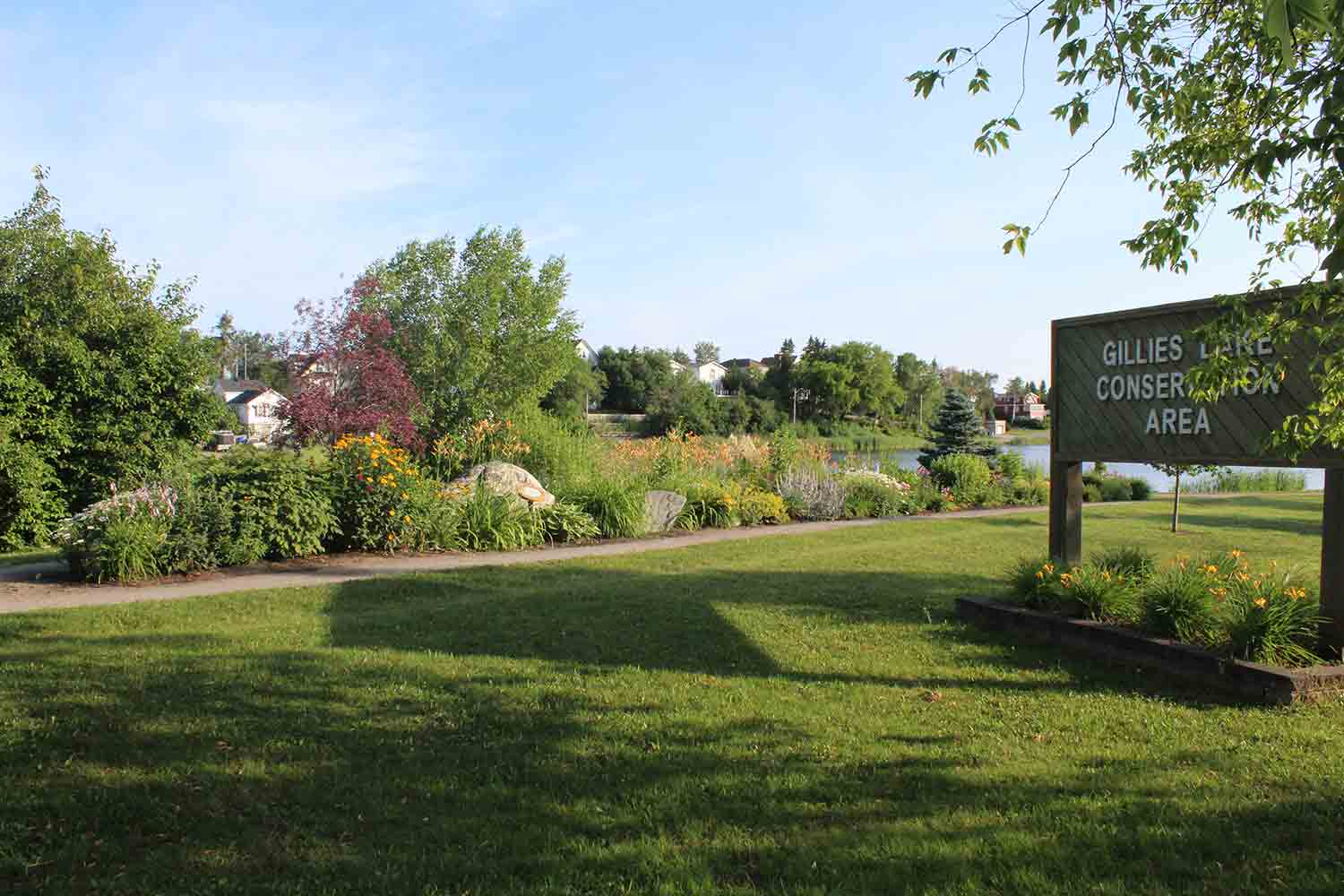 Gardens in bloom at Gillies Lake Conservation Area