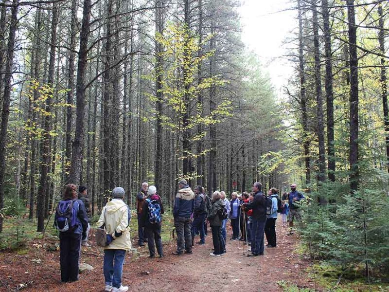 group of people listening to an nature interpreter on a woodland trail